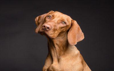 Excrementos caninos